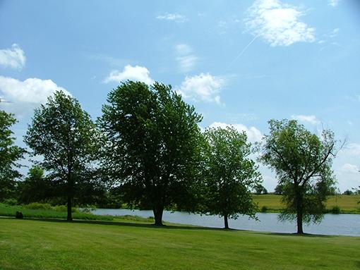 נוף ירוק עם עצים