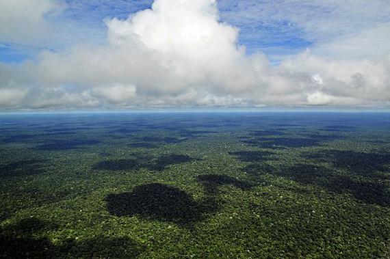 יערות הגשם בברזיל