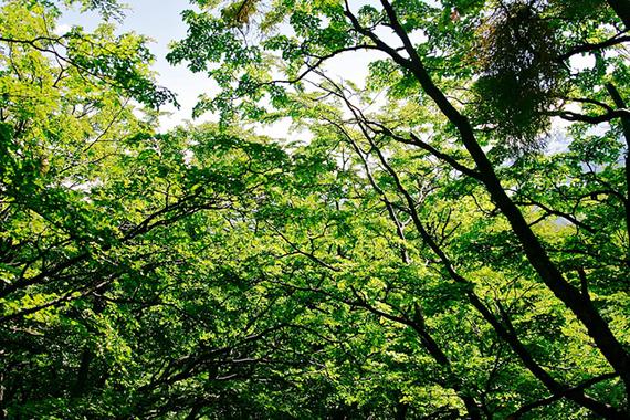 נוף עצים